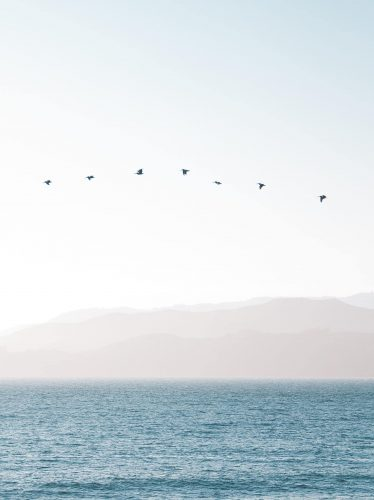 Image of birds flying in unison over the bay