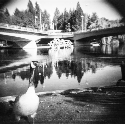 A goose standing in front of a lake, in black and white.