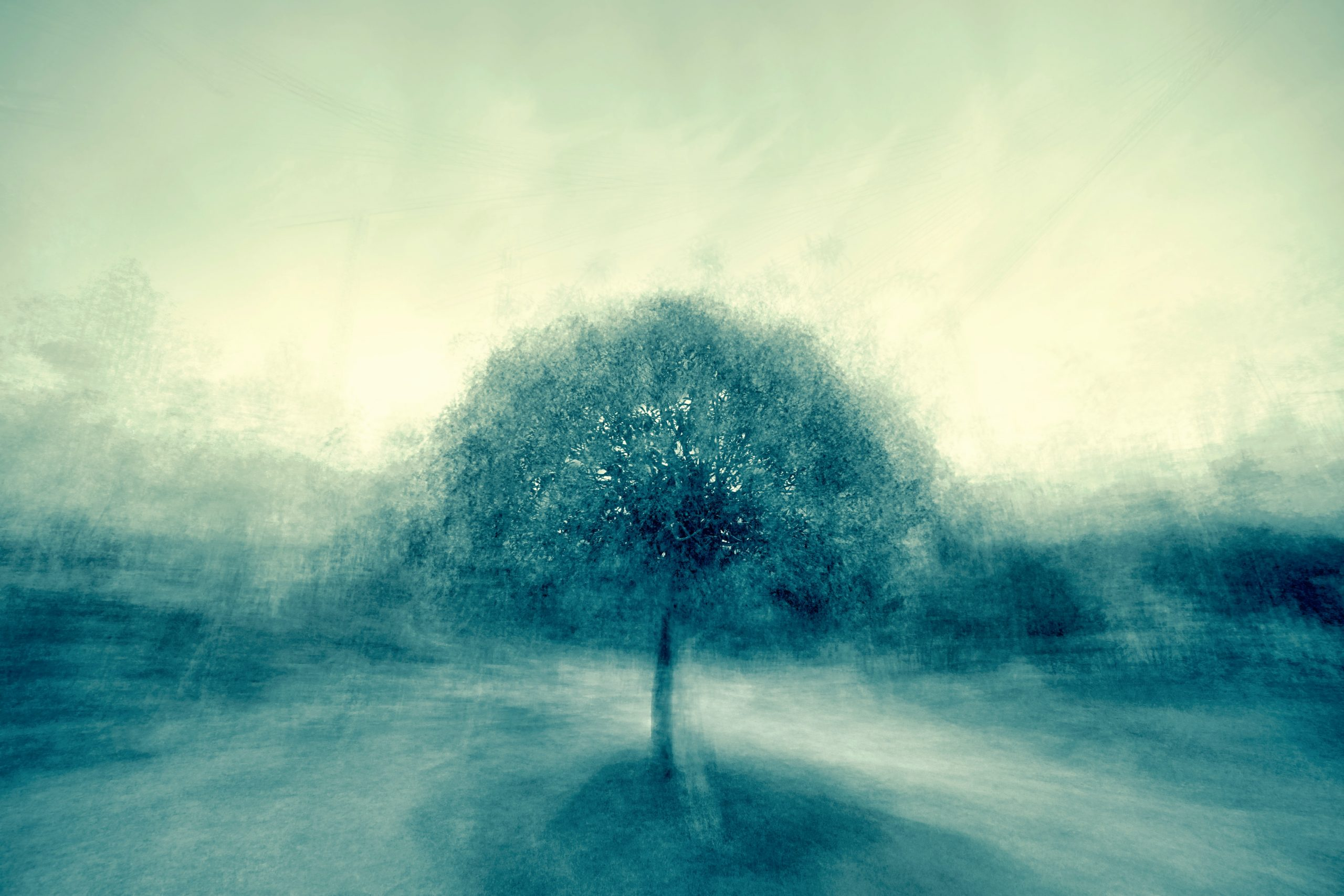 a photograph of a tree with a blue-grey filter and blurred background