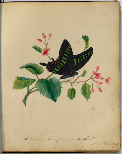 Album page containing a drawing of a black butterfly on a twig with flowers.