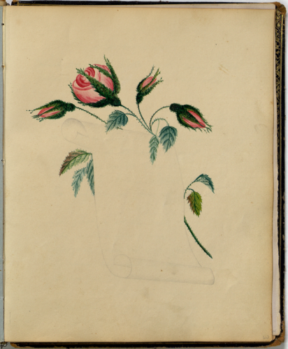 Album page containing an incomplete drawing of a spray of red rose behind a blank open scroll